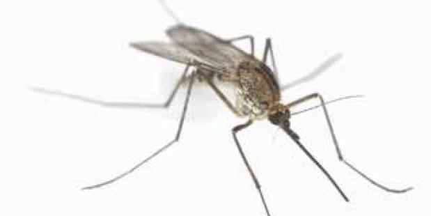 Meer muggen