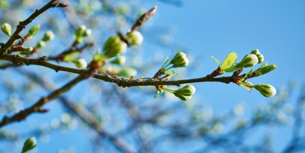 Gemiddelde temperatuur lente