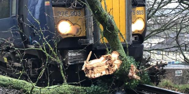 Omgewaaide boom in Engeland