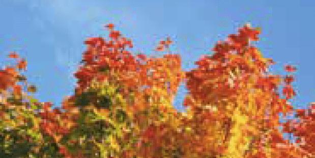 Zonnigste herfst ooit gemeten