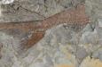 66 miljoen jaar oude fossielenschatkamer