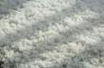 extreme hagel